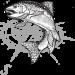 www.nwschoolofflyfishing.com